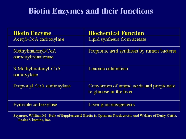 enzyme structure and function essay